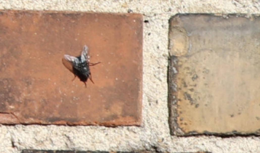 capture d'écran d'une orthophoto d'inspection d'ouvrage d'art avec une définiton à 0,3mm par pixel